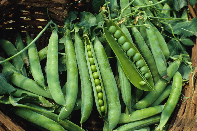 Pois - Flèche Verte