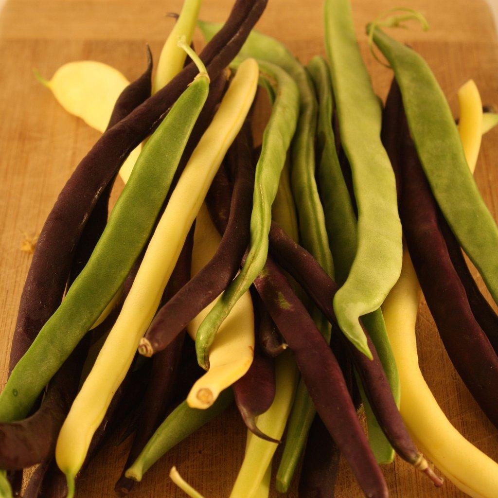 haricot – mange-tout (grimpant) – semis urbains