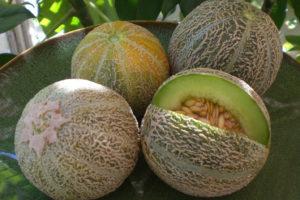 Melon Eden\\\\'s Gem
