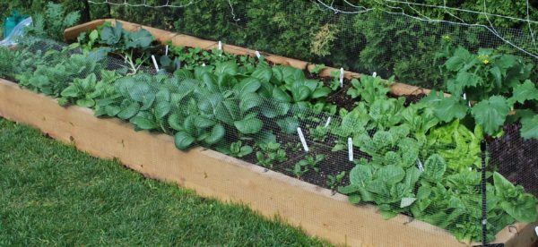 "Raised Bed Garden - Hemlock 2"" x 8"" x 10' planks"