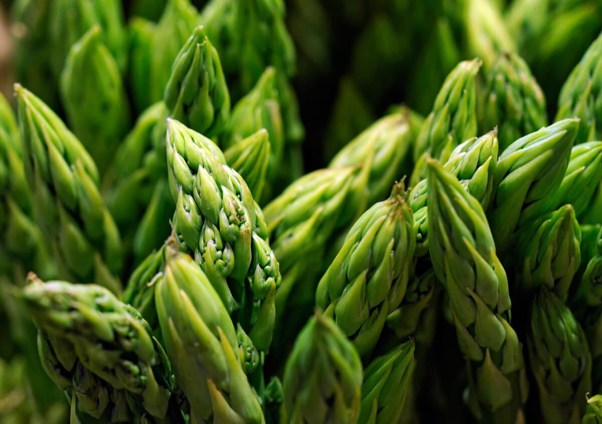 Asperge mary washington semis urbains - Comment planter des asperges ...