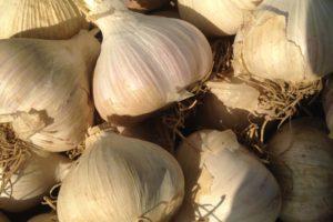 vegetables-garlic-music.jpg