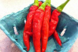 vegetables-pepper-red-rocket.jpg