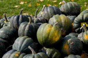 vegetables-squash-acorn-sweet-reba.jpg