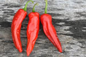 Hot Pepper Georgia Flame