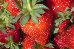 Albion-Strawberry