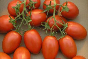 Bunch of napoli tomatoes