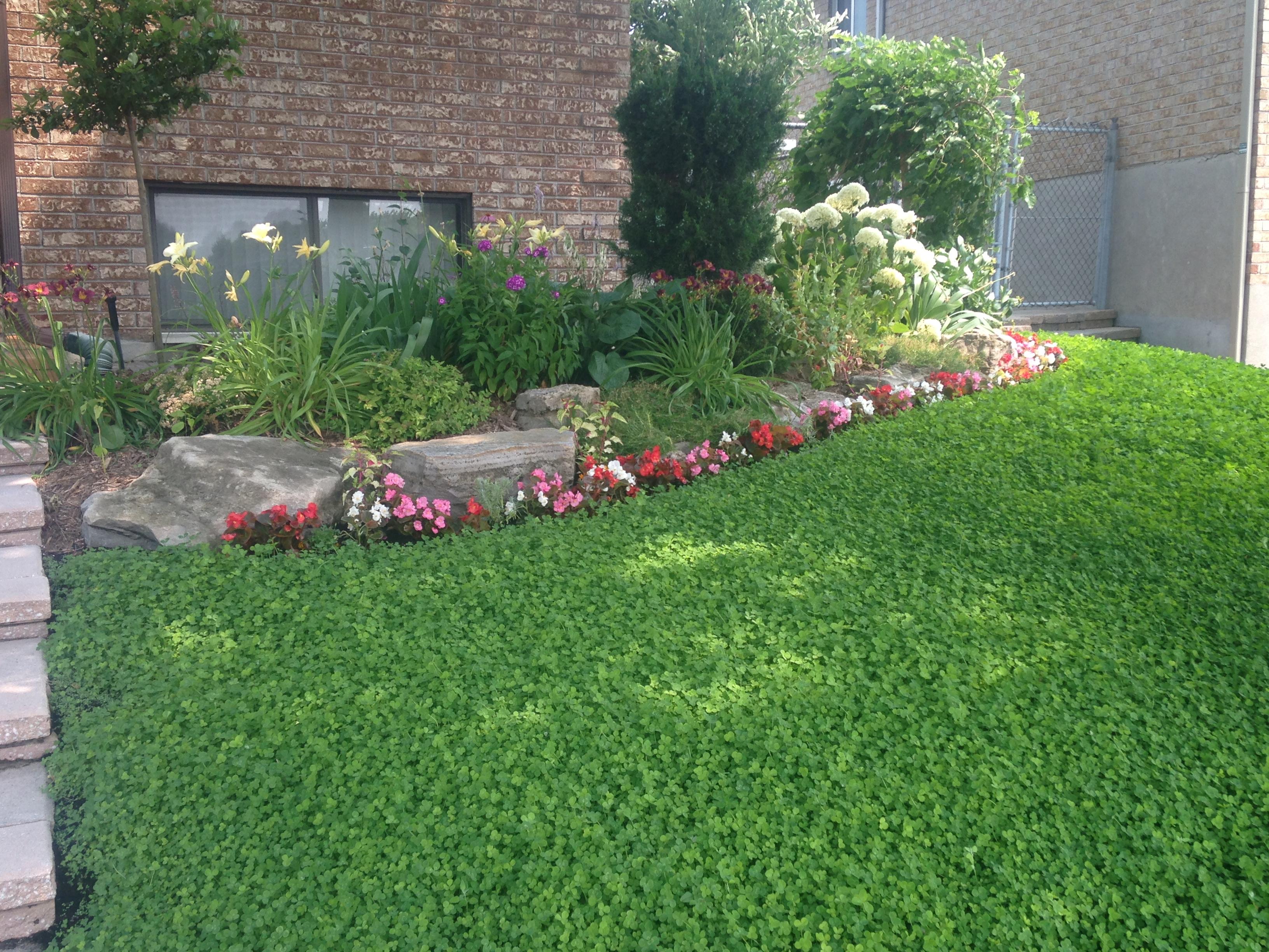 alternatives la pelouse une pelouse cologique semis. Black Bedroom Furniture Sets. Home Design Ideas