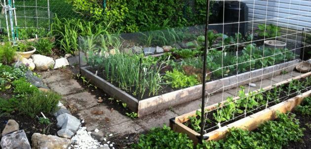 Le forfait d abondance semis urbains - Jardin potager palette amiens ...